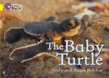 Collins Big Cat: The Baby Turtle: Band 03/Yellow av Andy Belcher og Angie Belcher (Heftet)
