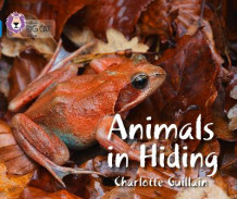 Animals in Hiding av Charlotte Guillain (Heftet)