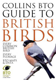 Collins BTO Guide to British Birds av Paul Sterry og Paul Stancliffe (Heftet)