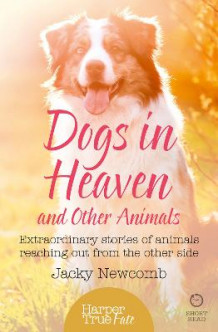 Dogs in Heaven: and Other Animals av Jacky Newcomb (Heftet)