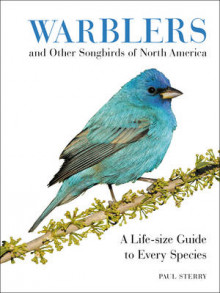 Warblers and Other Songbirds of North America av Paul Sterry (Innbundet)