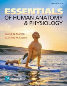 Essentials of Human Anatomy & Physiology Plus Masteringa&p with Pearson Etext -- Access Card Package av Elaine N Marieb og Suzanne M Keller (Blandet mediaprodukt)