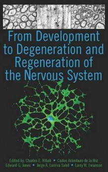 From Development to Degeneration and Regeneration of the Nervous System (Innbundet)