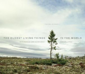 The Oldest Living Things in the World av Hans-Ulrich Obrist, Rachel Sussman og Carl Zimmer (Innbundet)
