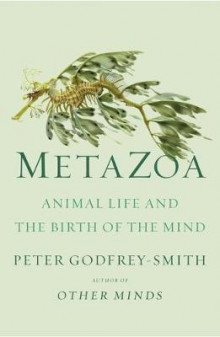 Metazoa av Peter Godfrey-Smith (Innbundet)