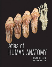 Atlas of Human Anatomy av Shawn D. Miller og Mark T. Nielsen (Heftet)