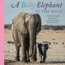Baby Elephant in the Wild av Caitlin O'Connell (Innbundet)