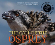 Call of the Osprey av Dorothy Hinshaw Patent (Innbundet)