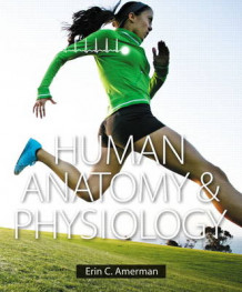 Human Anatomy & Physiology Plus Masteringa&p with Etext -- Access Card Package av Erin C. Amerman (Blandet mediaprodukt)
