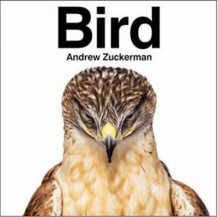 Bird av Andrew Zuckerman (Innbundet)