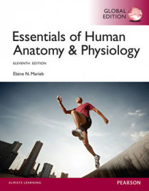 Essentials of Human Anatomy & Physiology with Mastering A&P av Elaine N. Marieb (Blandet mediaprodukt)