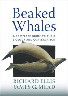Beaked Whales av Richard Ellis og James G. Mead (Innbundet)
