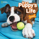 Omslag - It's a Puppy's Life