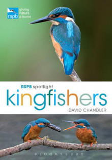 RSPB Spotlight Kingfishers av David Chandler (Heftet)