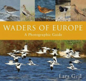 Waders of Europe av Lars Gejl (Innbundet)