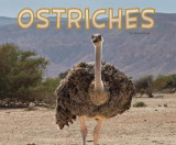 Omslag - Ostriches