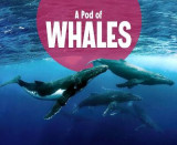 Omslag - A Pod of Whales