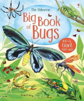 Big Book of Big Bugs av Emily Bone (Innbundet)