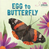 Life Cycles: Egg to Butterfly av Rachel Tonkin (Innbundet)