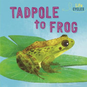 Life Cycles: From Tadpole to Frog av Rachel Tonkin (Innbundet)