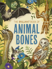 The Brilliant Book of Animal Bones av Anna Claybourne (Innbundet)