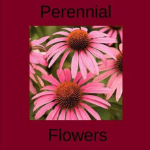 Perennial Flowers av Jim Dwyer (Heftet)