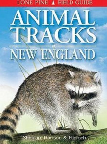 Animal Tracks of New England av Ian Sheldon, Tamara Hartson og Mark Elbroch (Heftet)