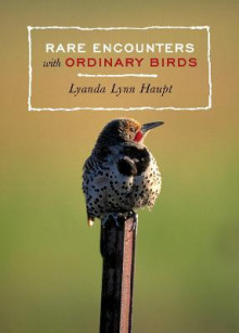 Rare Encounters with Ordinary Birds av Lyanda Lynn Haupt (Heftet)