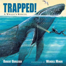 Trapped! A Whale's Rescue av Robert Burleigh (Heftet)