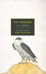 Omslag - The Peregrine
