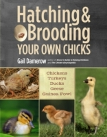 Hatching and Brooding Your Own Chicks av Gail Damerow (Heftet)