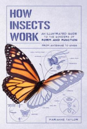 How Insects Work av Marianne Taylor (Heftet)