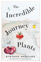 The Incredible Journey of Plants av Stefano Mancuso (Innbundet)