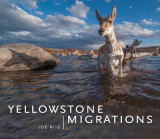 Omslag - Yellowstone Migrations