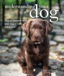 Understanding Your Dog av David Alderton (Heftet)