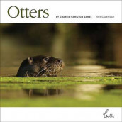Otters Wall av Carousel Calendars og Charlie Hamilton James (Kalender)