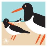 Omslag - I Like Birds: Oyster Catcher Boxed Notecards