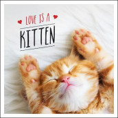 Love is a Kitten av Charlie Ellis (Innbundet)