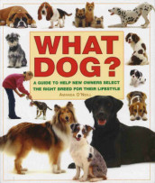What Dog? av Amanda O'Neill (Innbundet)