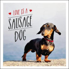 Love is a Sausage Dog av Charlie Ellis (Innbundet)