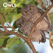 Owls 2020 Mini Wall Calendar av Inc Browntrout Publishers (Kalender)