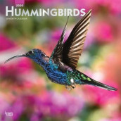 Hummingbirds 2020 Square Wall Calendar av Inc Browntrout Publishers (Kalender)