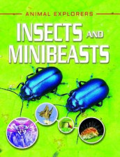 Insects and Minibeasts av Clare Hibbert (Innbundet)
