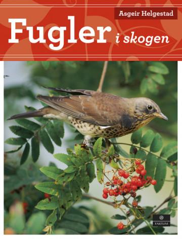 Bilde av Fugler I Skogen