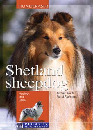 Bilde av Shetland Sheepdog